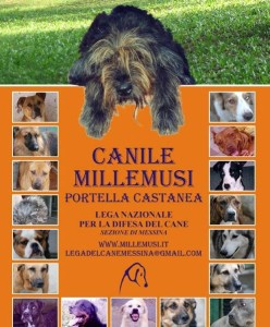 canile millemusi messina