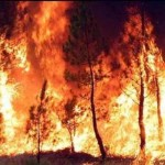bosco-in-fiamme-incendio_949
