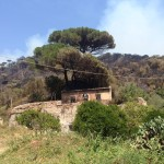 incendio a messina san michele (19)