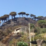incendio a messina san michele (21)