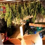8 chili marijuana santa lucia sopra contesse messina